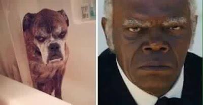 Samuel L Jackson con cachorro