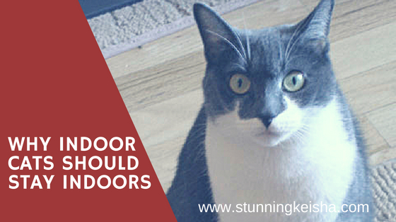Why Indoor Cats Should Stay Indoors