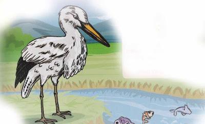 burung bangau yang angkuh