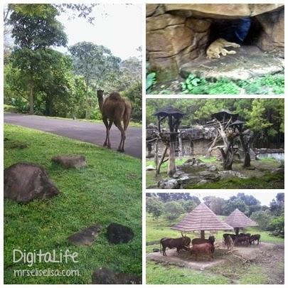 """Perjalanan """"Komplit"""" Menuju Taman Safari Prigen."""