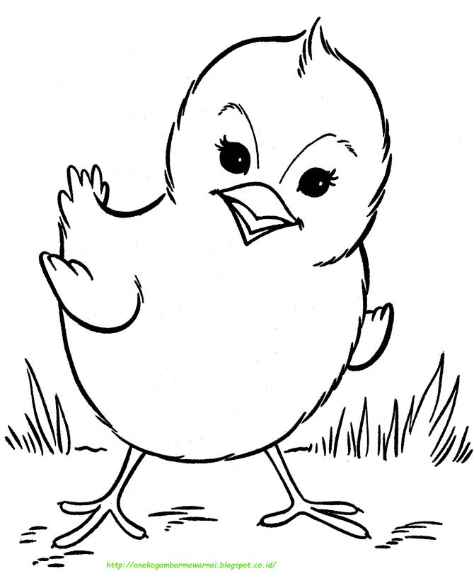 80+ Gambar Ayam Yang Belum Diwarnai Paling Bagus