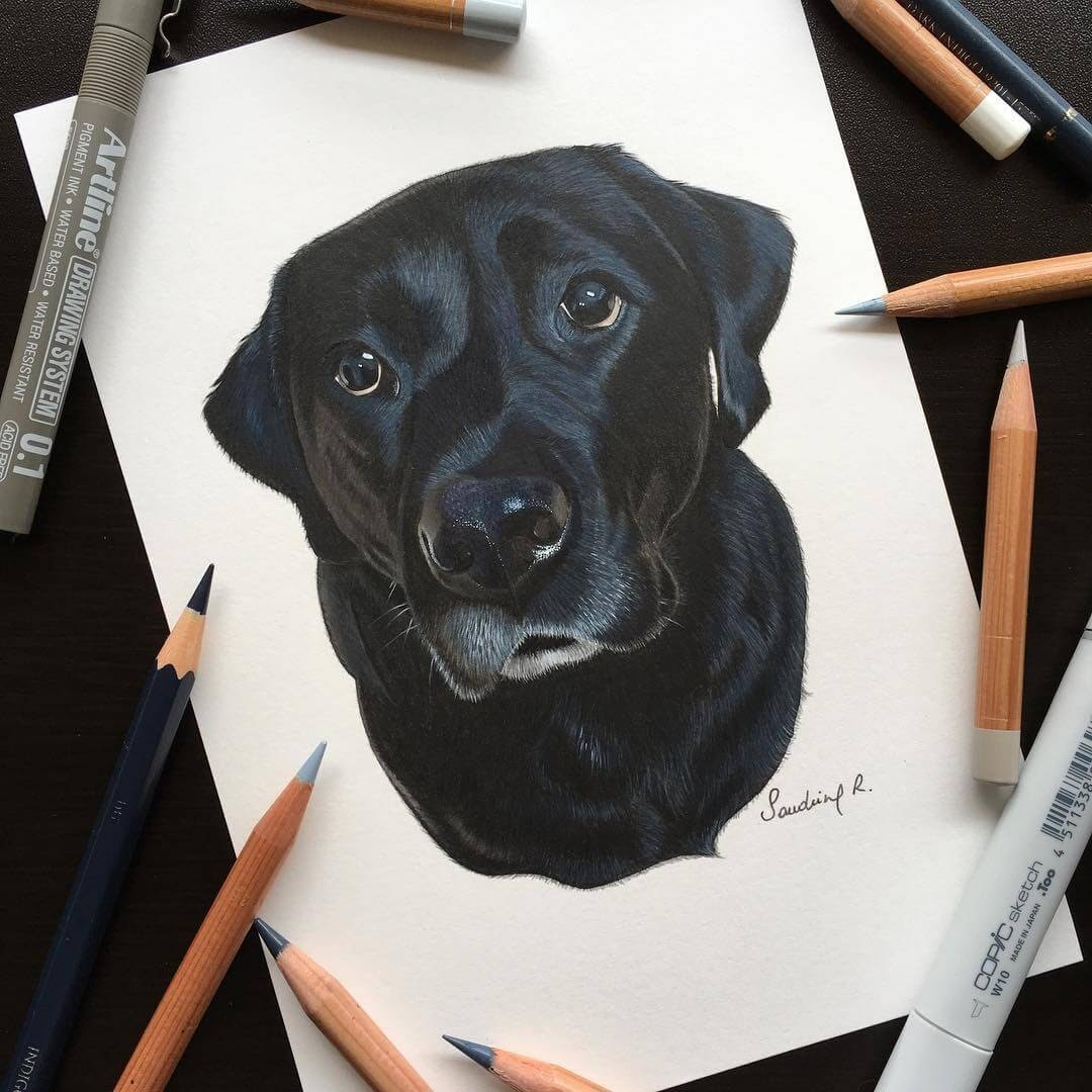 04-Blacklab-Labrador-Sandrine-R-Sweet-Realistic-Animal-Portrait-Drawings-www-designstack-co