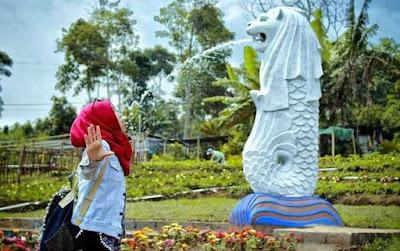 Spot Wisata Taman Bunga Celosia