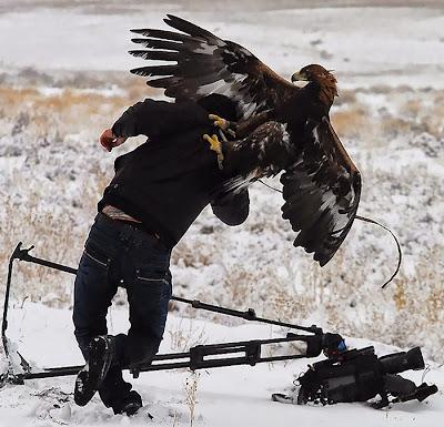 Fotografo atacado por una águila.