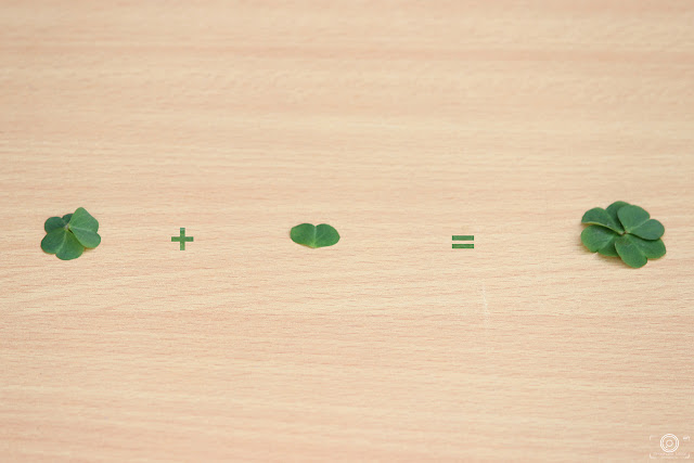 Luck By Shashank Mittal Photography, Luck, Shashank Mittal Photography, 4 leaf clover, clover