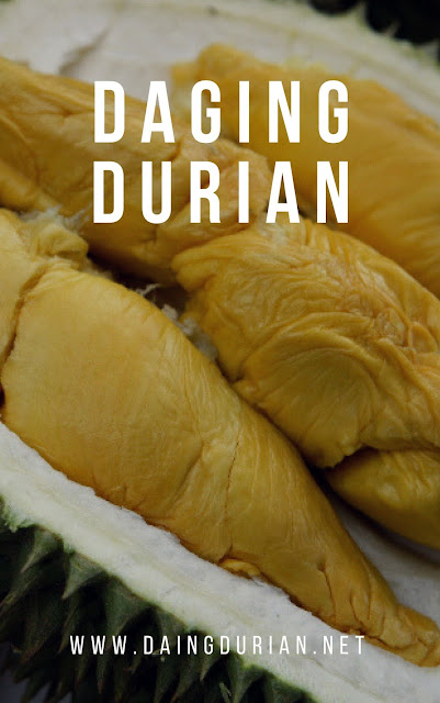 sedia-daging-durian-medan-yang-tiada-duanya-di-gunungsitoli