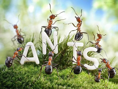 cara alami mengusir semut ampuh efektif