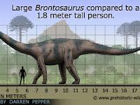 8 Fakta Menarik Brontosaurus Yang mungkin Anda Sukai