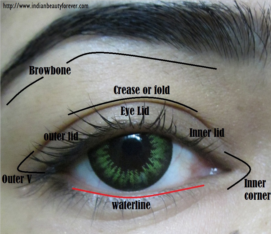 Eye makeup Terms and parts of Eyes with Diagram - Indian ...