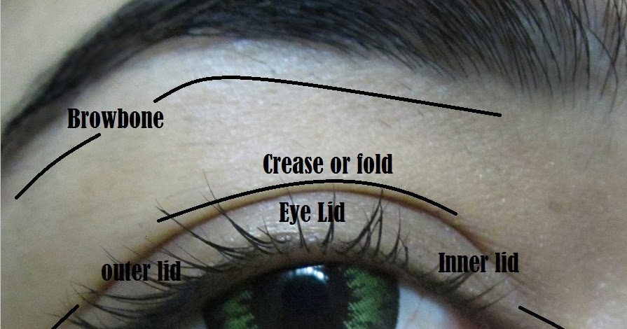 Eye makeup Terms and parts of Eyes with Diagram  Indian