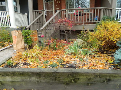 Greenwood-Coxwell Toronto Fall Cleanup Front Yard Before by Paul Jung Gardening Services--a Toronto Organic Gardening Company