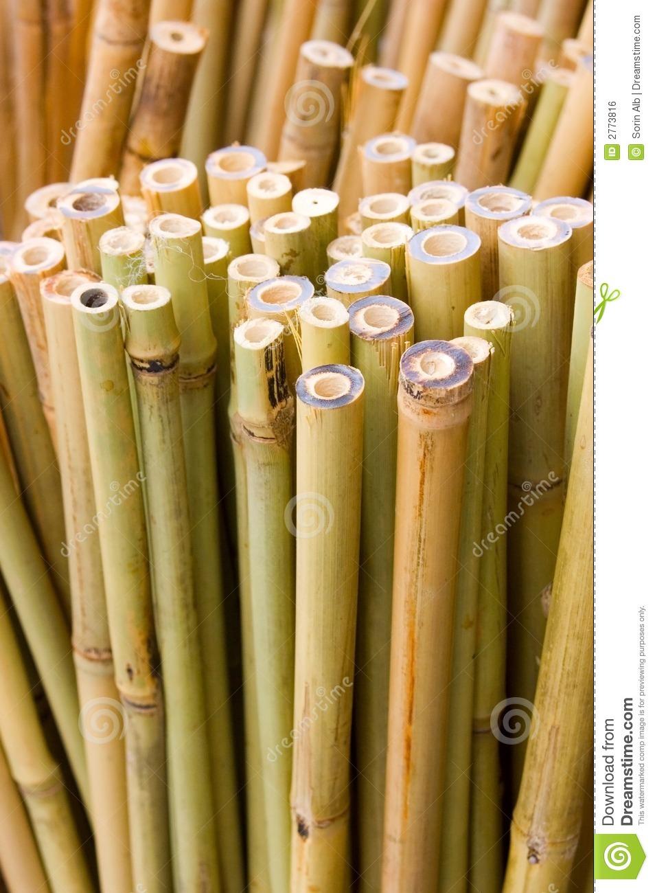 Bamboo Hut Tattoo