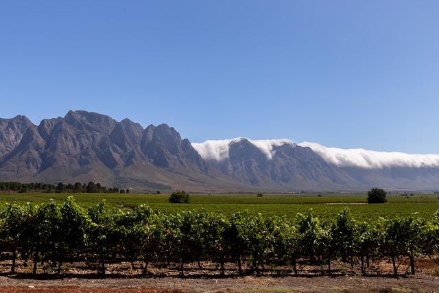 Vineyards of the Slanghoek Valley