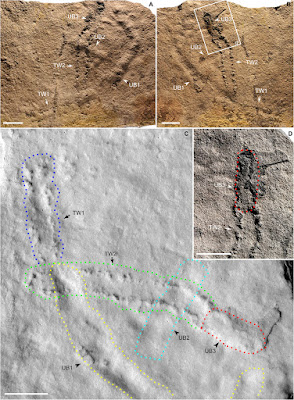 camino fósil