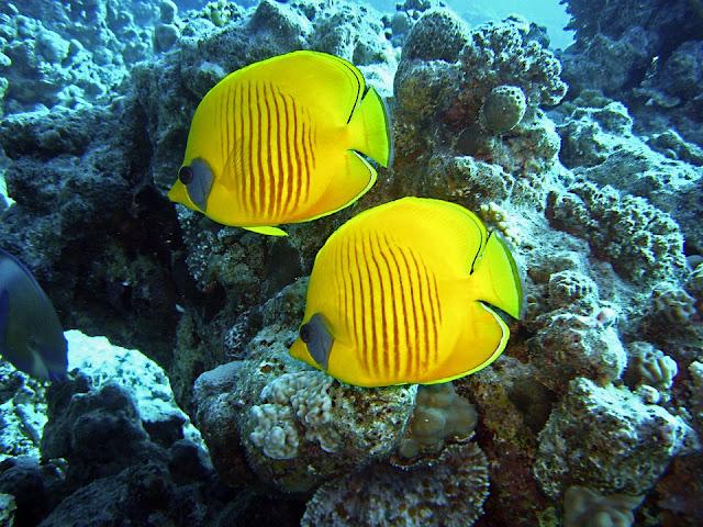 Le migliori destinazioni per praticare sport acquatici