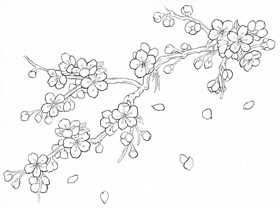 gambar mewarnai bunga sakura terbaru