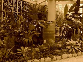 O Belo Bromeliário do Jardim Botânico, Jardim Botânico do Rio de Janeiro