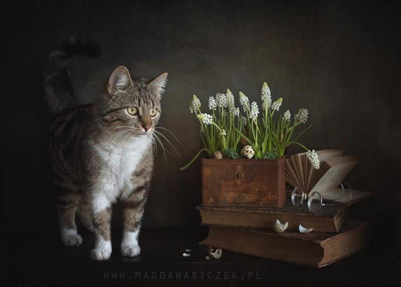 Magda Wasiczek Photography Fotografía plantas y jardines