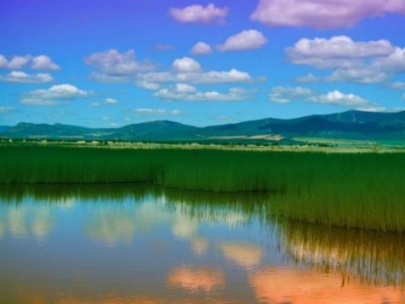 ley forestal de suelos y agua