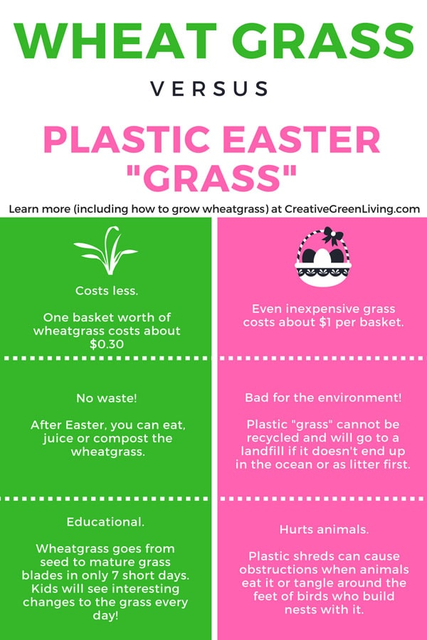 learn how to grow your own easter grass. This plastic easter grass alternative is easy to grow and an inexpensive DIY project to do with your kids! When easter is over, eat the leftover Easter grass or feed it to your chickens. #creativegreenliving #eastergrass #edibleeastergrass #ecofriendly #easter #easterbasket #groweastergrass