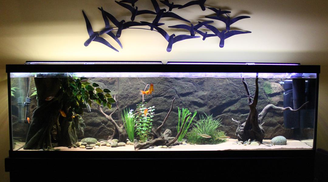 Des poissons une passion que sont les poissons rouges for Poisson rouge aquarium 10l
