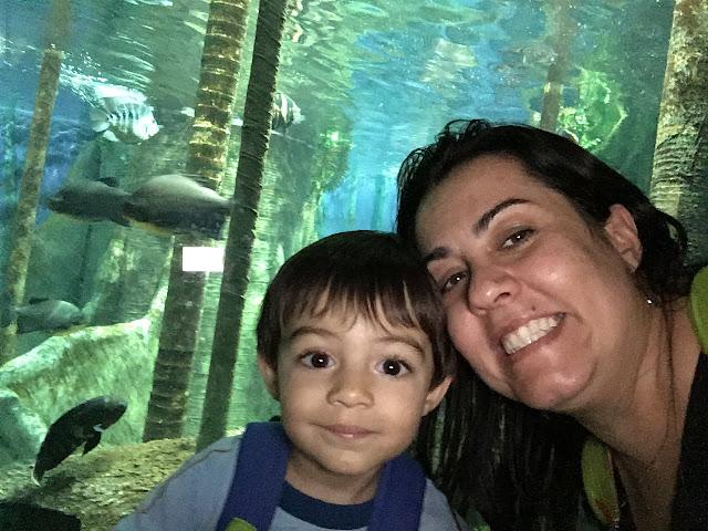visita ao aquário de santos