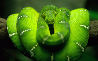 Green snake nature type images