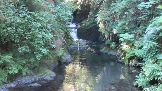 Olympic mnational park, national park, park, olympic, waterfalls, hiking, forest