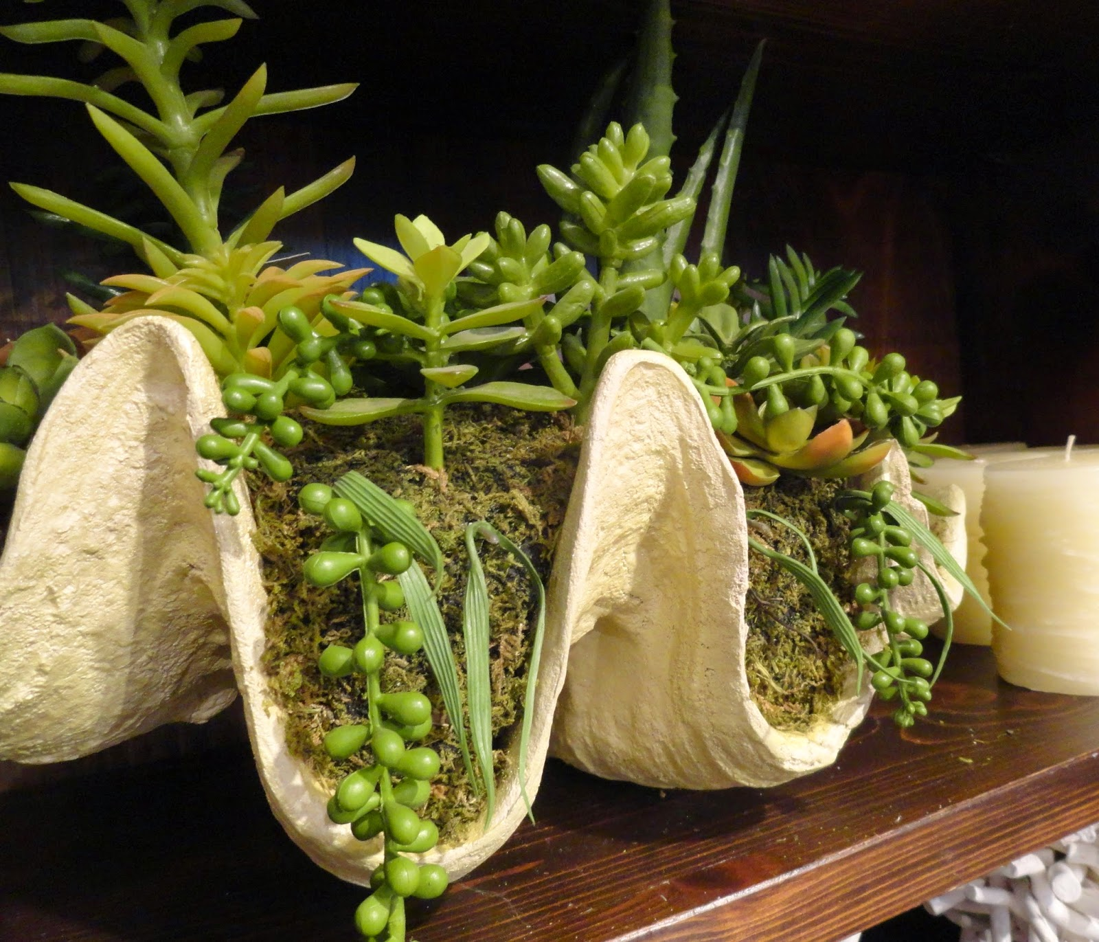 Best Succulents For Low Light Danger Garden