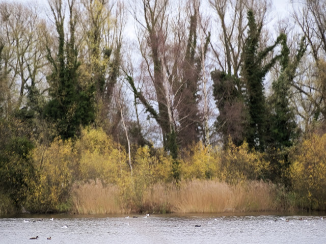Bare trees, yellow bushes, brown reeds and blue water all in motion