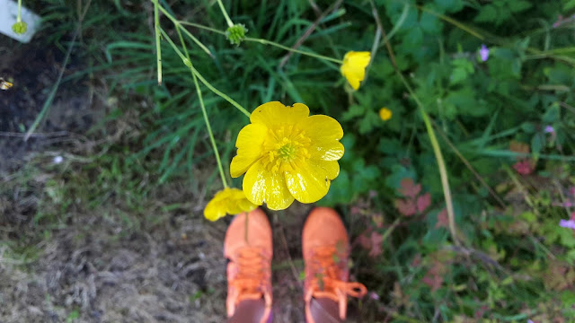 Project 366 2016 day 174 - 5k run & buttercups // 76sunflowers
