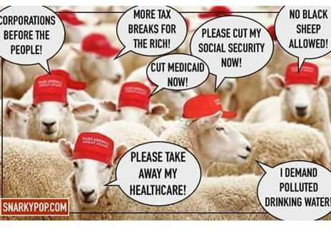 Flock of sheep, all wearing MAGA hats, saying,