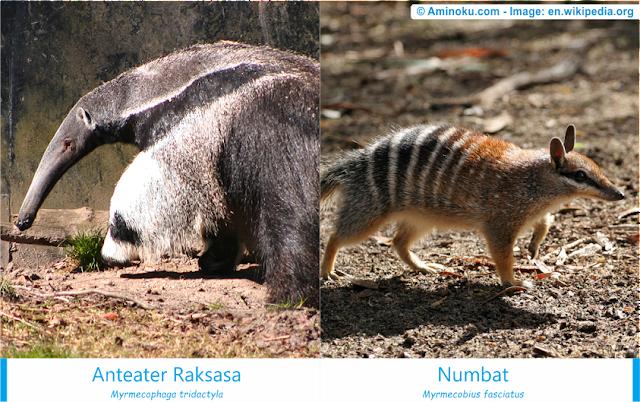 Perbedaan anteater dan numbat