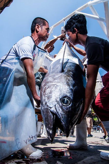 Tuna Festival Photo Contest Winners