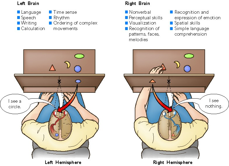 Split brain does not lead to split consciousness ...