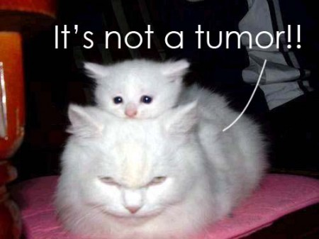 Image of white kitten on top of a larger white cat that is grumpily saying