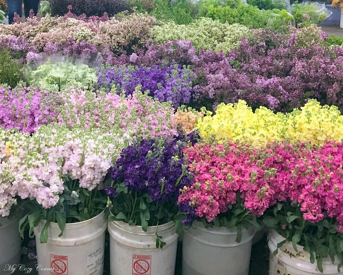 My Cozy Corner Visiting San Francisco Flower Mart
