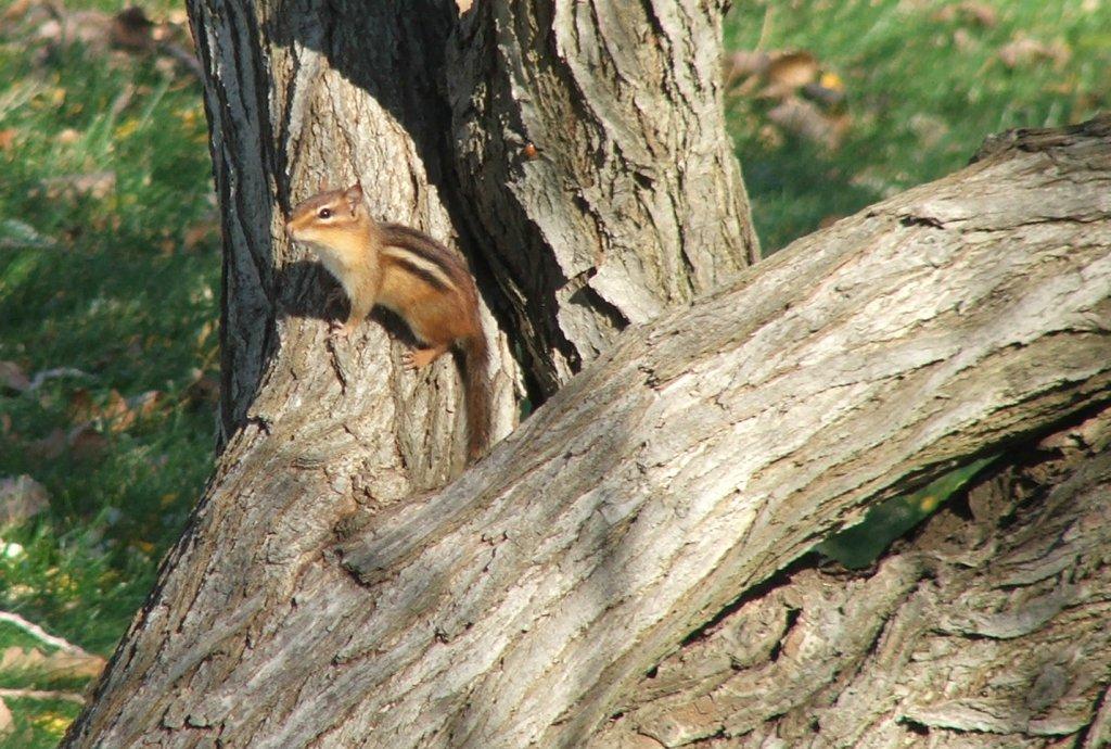 Ohio Birds and Biodiversity: Deciphering the language of