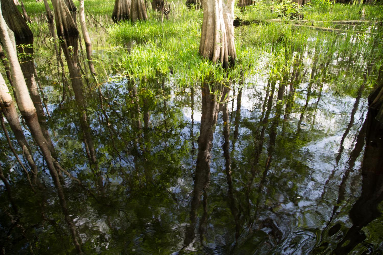 Orlando Florida Air Boat Ride Searching for Alligators