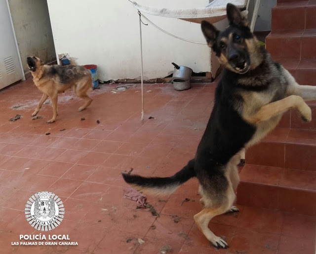 Llama a la Policía al ser atacada por su perro