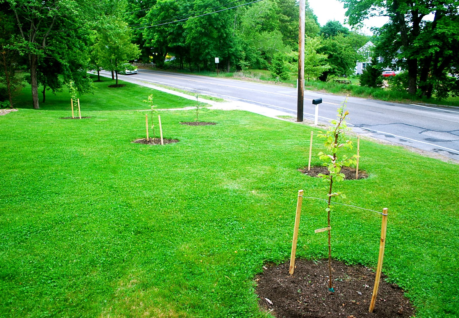 Staking: Seeding The Good Life: Fruit Trees Update
