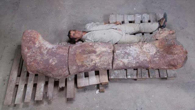 El animal más grande que pisó la Tierra: el Titán Patagónico