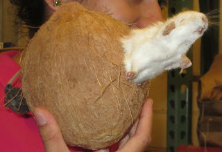 Coconut Toys 90
