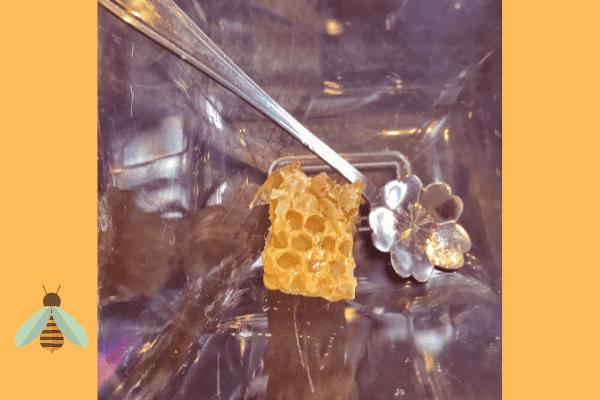 raw honey comb with flower spoon