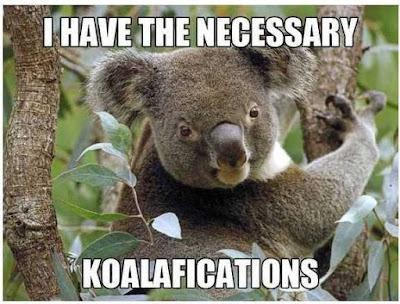Koala funny meme