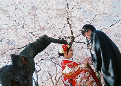 桜で和装ロケーション