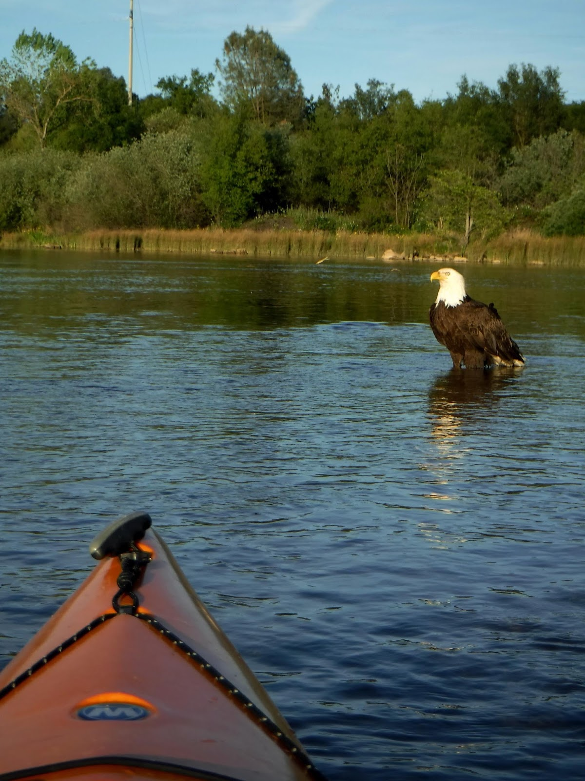 Outside adventure to the max eagle of the lake for Lake natoma fishing