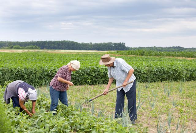 Resultado de imagem para Governo anuncia R$ 31 bilhões para agricultura familiar