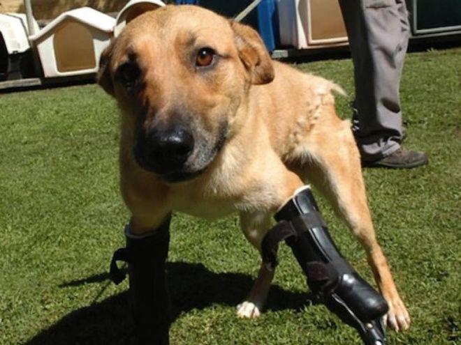 Perrito Era torturado por los Zetas, pero una fundación lo rescató