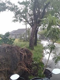 Angin Puting Beliung Terjang Jember Selatan